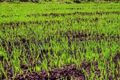 Zakładanie trawnika na jesień – jak się do tego zabrać?