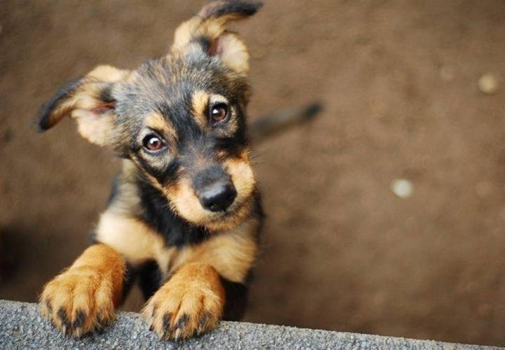 Jaką karmę wybrać dla dorosłego psa?